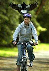 Attack cyclist