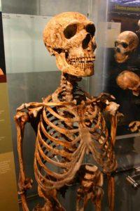 neandertal-5
