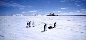 838_antarctique